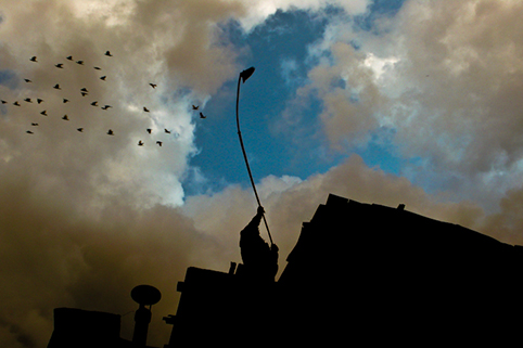ara_madzounian_pigeon_handler_at_dusk